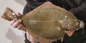 flounder orange spots